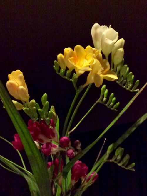 ブログ用の写真H28年4月